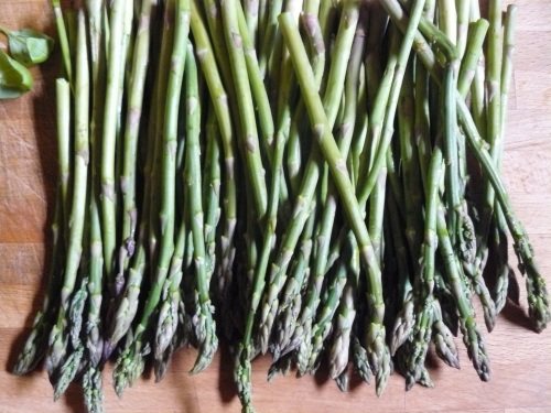 asparagus-all-in-a-row1