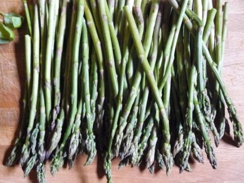 asparagus-all-in-a-row1